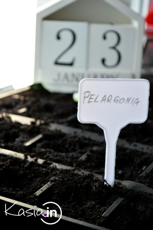 Uprawa Pelargonii Z Nasion Kasiain